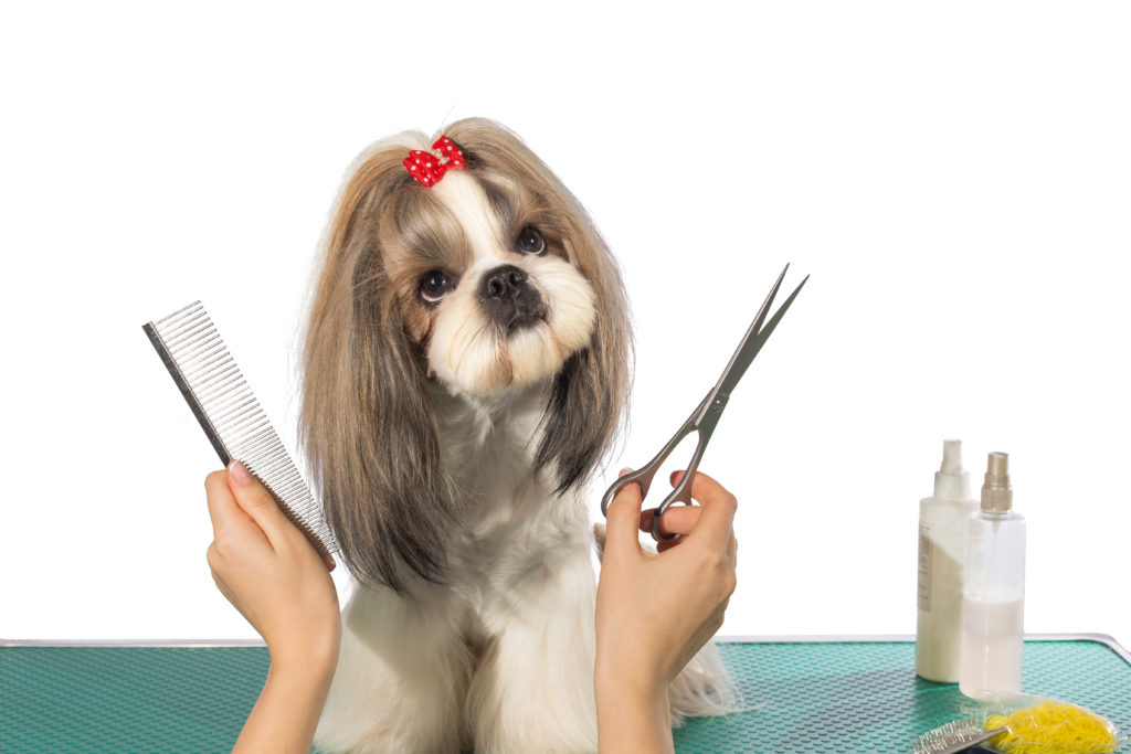 Grooming Is Important For Your Pet