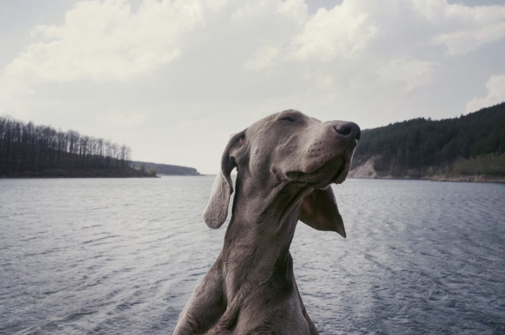An older dog enjoys a day on the lake.